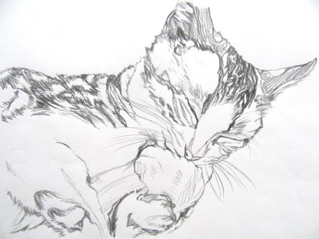 cat_2.JPG