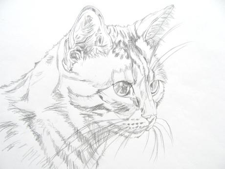 cat_7.JPG